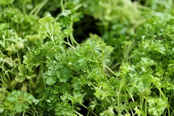 Food Leader - warzywa